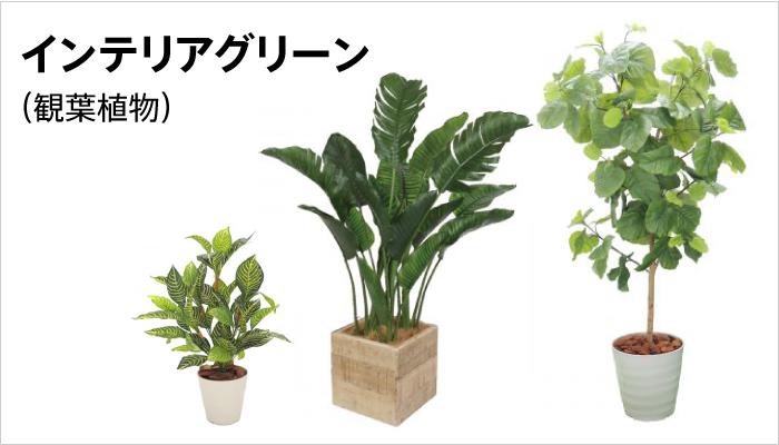 インテリアグリーン(観葉植物)