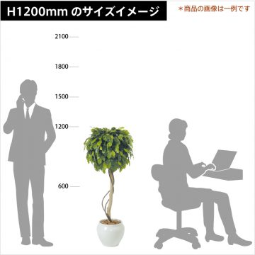 green-size-h1200