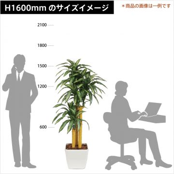 green-size-h1600