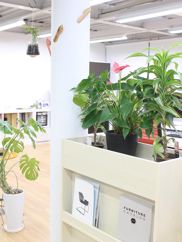 オフィスの緑化