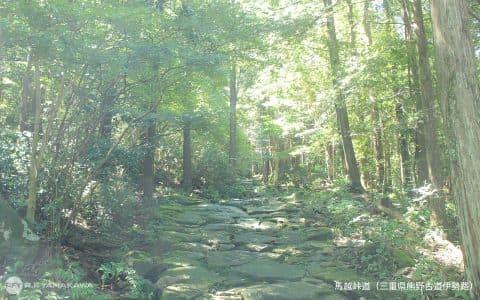 世界遺産の熊野古道伊勢路。「馬越峠の石畳」背景