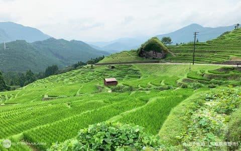 大切にしたい日本の原風景。三重県熊野市の「丸山千枚田」背景その②