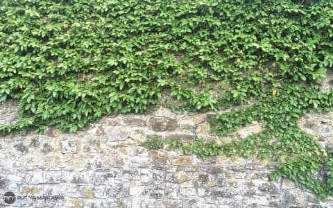 エコな雰囲気を醸し出す、ツタの這う壁背景