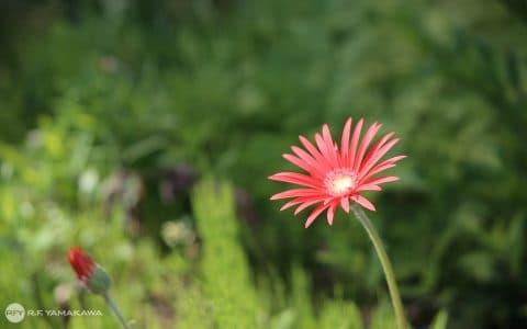 グリーンに映える赤いお花背景